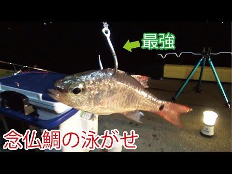 念仏鯛の泳がせ釣りに巨大な怪物が喰ってきた【夜の堤防】