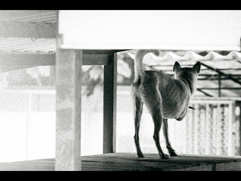 The StrayDog [ Documentary ]