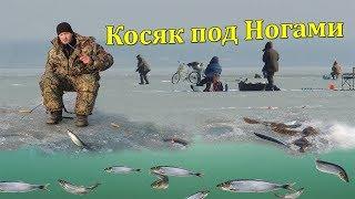 Вот это Рыбалка! Рыба Ходит Косяками и Клюёт на Самодельные Снасти.