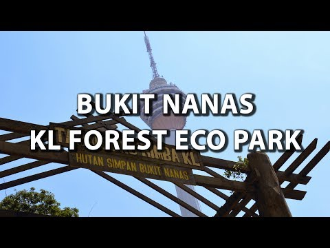 Bukit Nanas KL forest ECO park, forest reserve, canopy walk