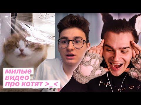 5 Милых Видео Про Котят🐾 | Невидимая стена | Спасение котёнка | Брайн, видео про кошек | Реакция