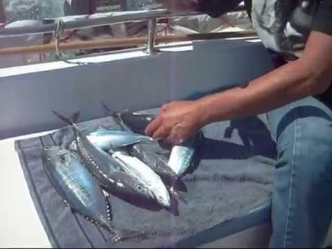 Una tranquilla giornata di pesca.wmv