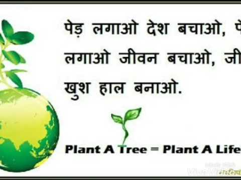 tree plantation in hindi About tree plantation | classification: about tree plantation in forestry, plantations of trees are typically grown as an even-aged monoculture for timber production, as opposed to a natural forest, where the trees are usually of diverse species and diverse ages.