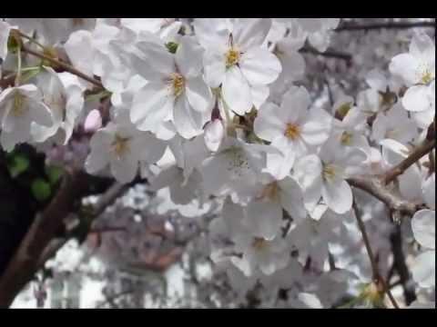 "Jon Anderson \ Rick Wakeman ""Living Tree Part 1"""