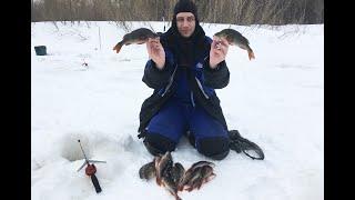 Окунь атакует Последняя рыбалка перед самоизоляцией Сидим дома Зимняя рыбалка 2020