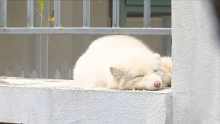 Wild white fox found in residential area in southwest China