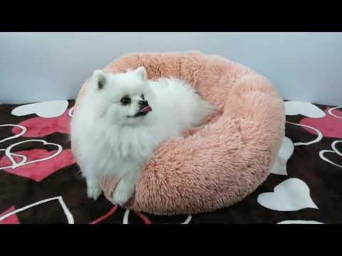 donut-cuddler-dog-&-cat-bed
