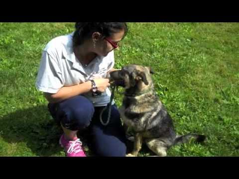 Cuyahoga County Animal Shelter 7 25 11