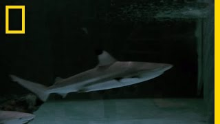 Blacktip Sharks and a Sea Turtle Get New Home   National Geographic