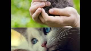 "Стихотворение ""Кошка"""