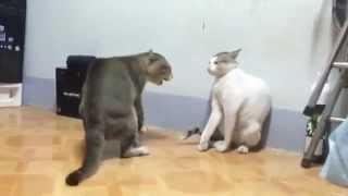 Mortal Kombat Cats | Коты дерутся