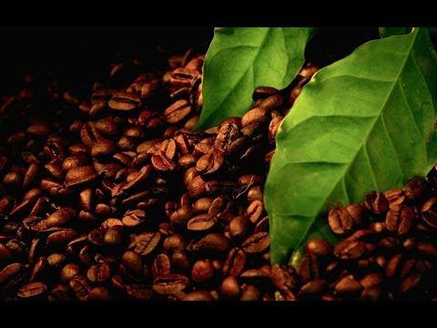 """Cafe """"Emmanuelle shine"""" [in honor of Laura Gemser] 咖啡馆"""