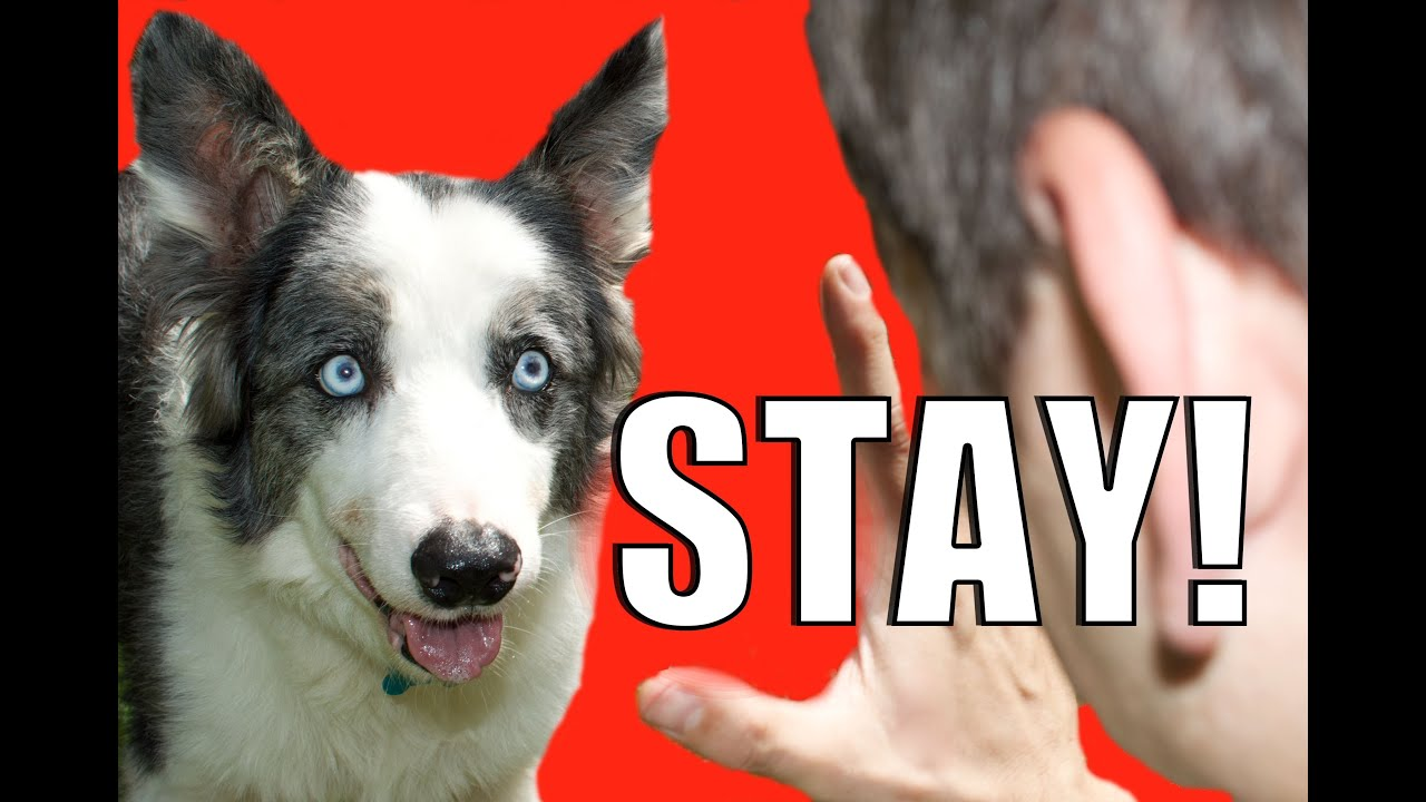 Best Way To Stop Dog Barking