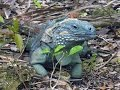 Cayman Islands - wildlife and heritage