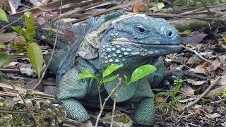 Cayman Islands - wildlife and heritage
