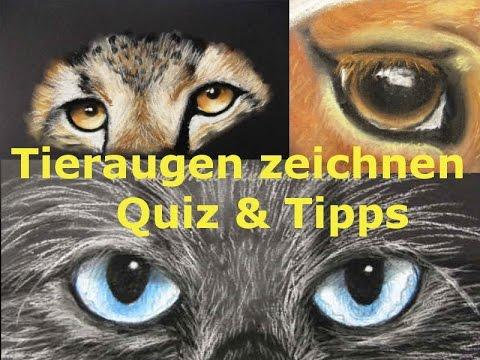 Tiere zeichnen lernen: Augen / Quiz & Tipps / Pastellmalerei