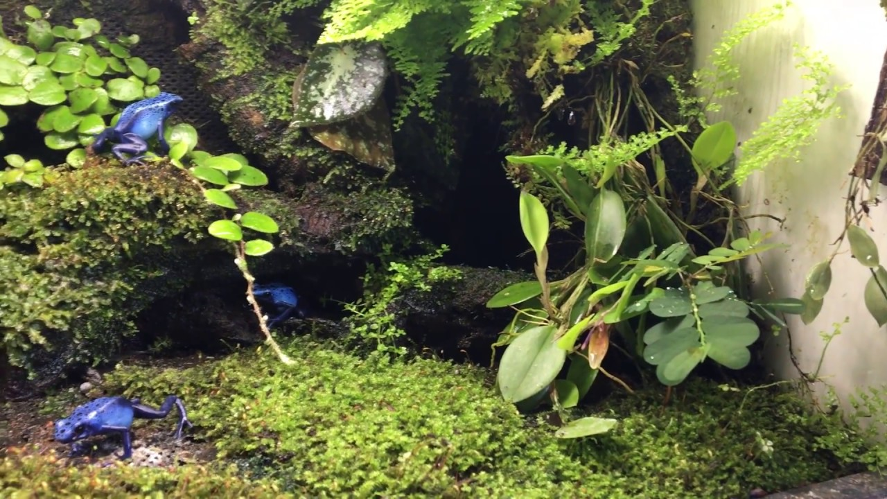 Moss Terrarium With Poison Dart Frogs Youtube