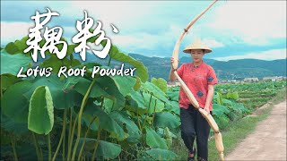 Lotus Root Powder - The Nutritious Summer Delicacy in Lotus Pool
