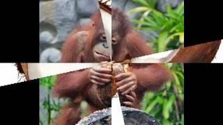 Как правильно выбрать и легко открыть кокос