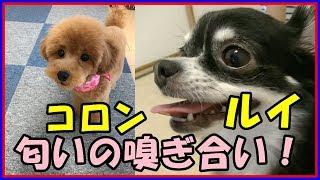 チャンネル登録をお願いします! @こうもものLINEスタンプ販売中! htt...