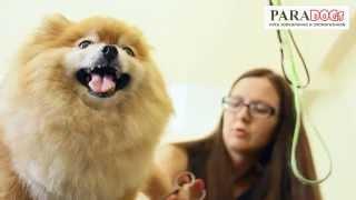 видео курсы стрижки собак в москве