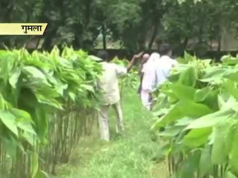 A brighter future ahead? Farmers reaping benefits from lac cultivation