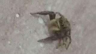Gambar cover Yakın çekim örümcek