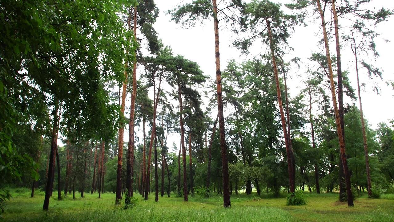 Нальчик. Атажукинский сад 4к / Nalchik. Atazhukinsky garden 4k