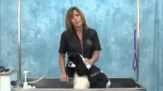 How To Groom American Cocker Spaniel (show Trim) Jodi Murphy Instructional Series Dvd