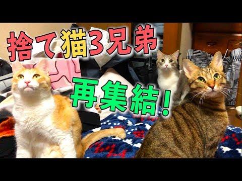 ついに揃った元捨て猫3兄弟!懐かしの兄弟に新年の挨拶に来てくれました…!