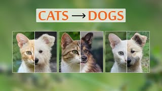 This AI Creates Dogs From CatsAnd More!