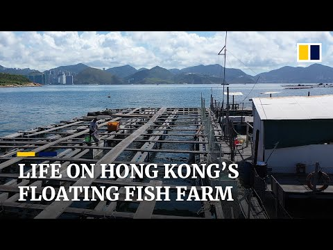 Hong Kong fish farmer plans to spend rest of his life on floating farm despite industry's decline
