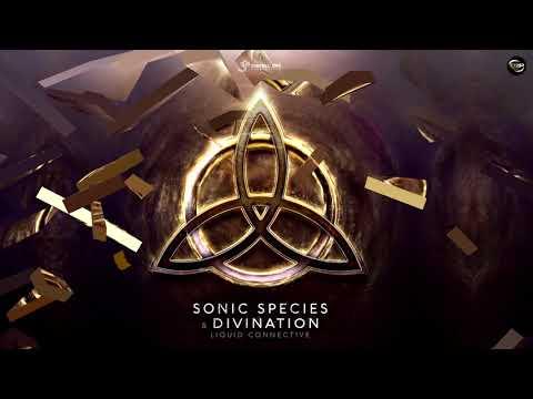 Sonic Species vs Divination - Liquid Connective (Preview)
