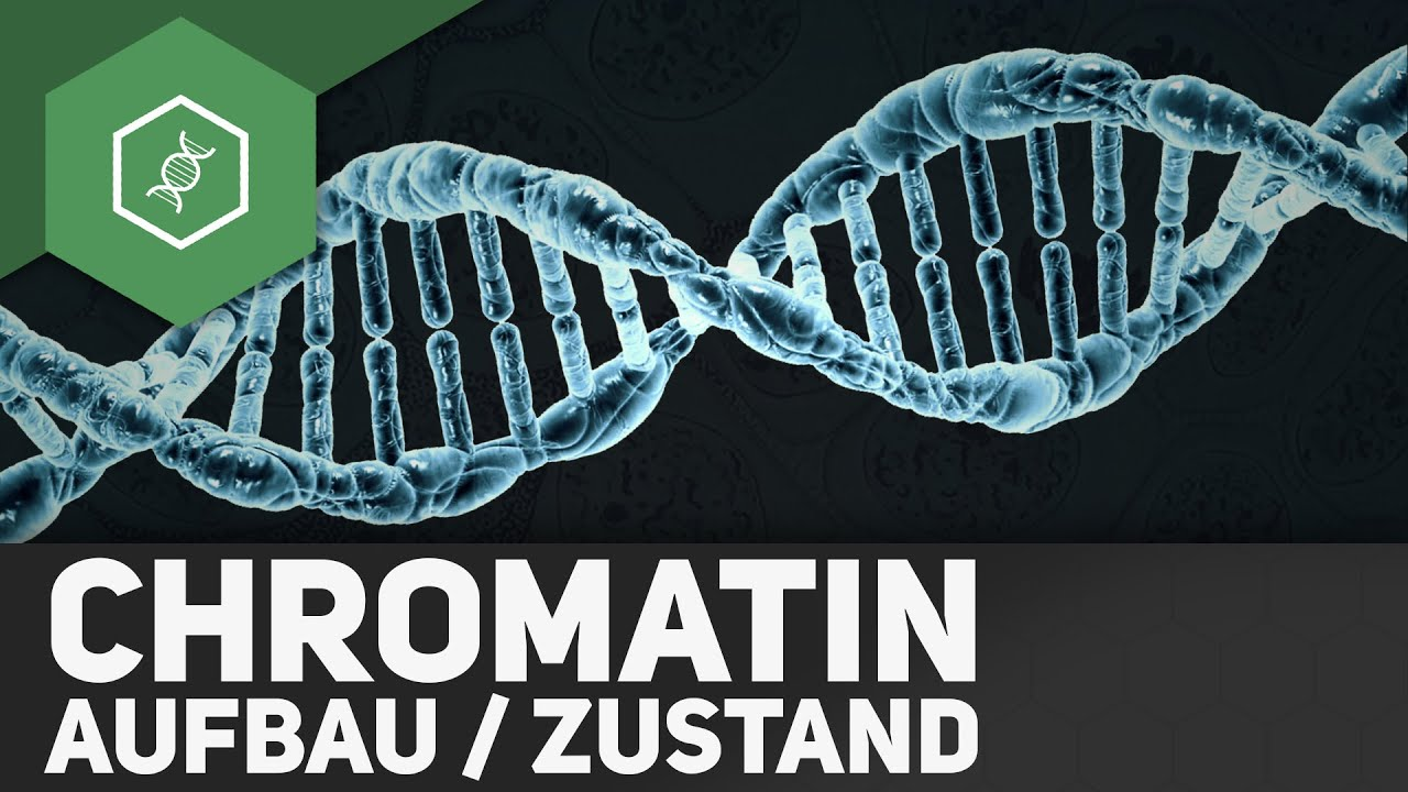 Aufbau & Zustand des Chromatins ○ Gehe auf SIMPLECLUB.DE/GO & werde ...