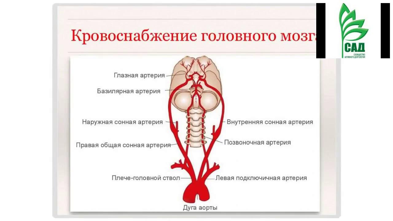 Замедленное кровообращение головного мозга