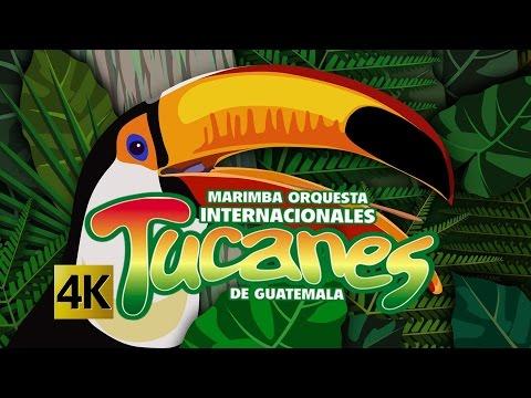 Internacionales Tucanes - Concierto Rompiendo Fronteras / Calidad 4K: DifosaTv presenta a los artistas guatemaltecos, INTERNACIONALES TUCANES en el Concierto ROMPIENDO FRONTERAS para poder disfrutar su música en vivo. Si desean saber algo más de la música de INTERNACIONALES TUCANES búscalos en:  Web: http://difosamusic.net/Principal.html Facebook: http://www.facebook.com/profile.php?id=1035048184 Twitter: http://www.twitter.com/#!/difosamusic