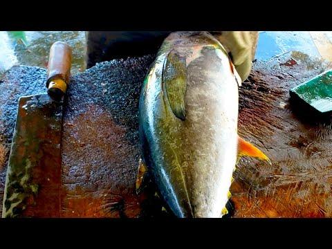 How To Cut Yellow Fin Tuna | Fish Cutting Skills