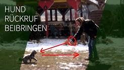 Hund Rückruf beibringen ► Rückruftraining ► Sicherer Rückruf Hund