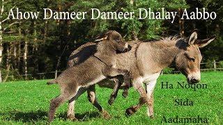 Xikmaddii Dameerka | Ahow Dameer Dameer Dhalay aabbe