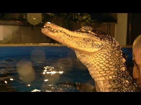 Mit Krokodilen Schwimmen Tv Total Youtube