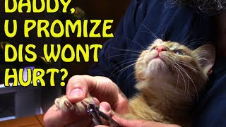 Trim Your Kittens' Claws - Safe & Easy