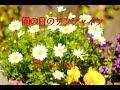 雨の日のサンシャイン ( 沢田聖子 ) cover / 歌:takimari