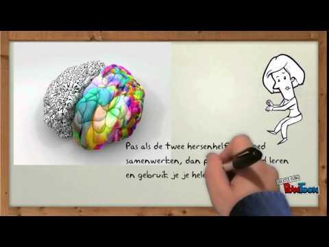 Werking van de hersenen