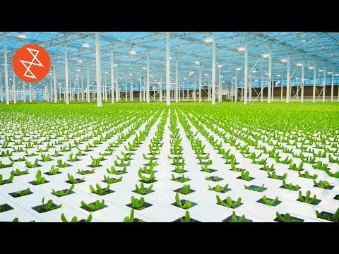 Food Grown Without Soil   Où se trouve: Lufa Farms