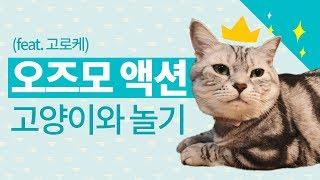 오즈모 액션으로 고양이와 놀자! OSMO ACTION …