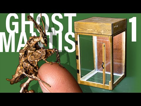 Ghost Mantis Vivarium pt 1 (Custom Insect Terrarium)