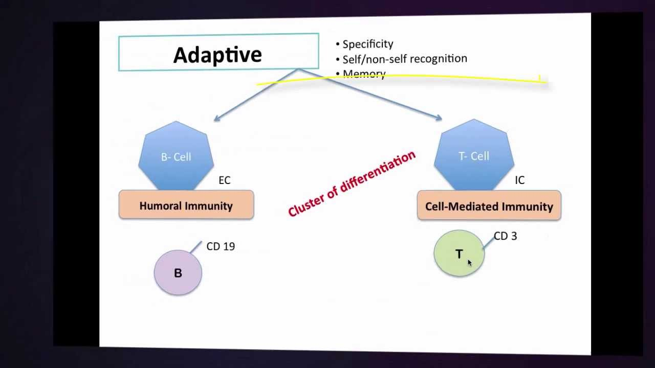 innate immunity-Immunology basics - YouTube