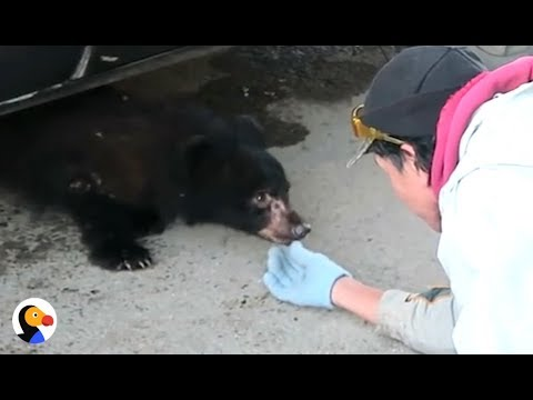 What To Do If You Run Into A Bear | The Dodo