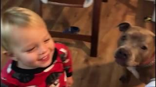 Смешные животные Свежие приколы Приколы со зверьками - Забавное видео 2019 МатроскинТВ