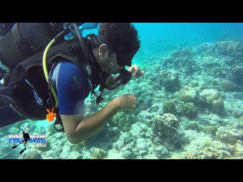 India scuba diving with pro dive mauritius